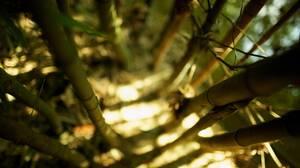 Earth Bamboo 2560x1440 Wallpaper