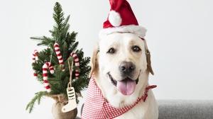 Dog Pet 4295x2863 Wallpaper