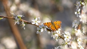 Blossom Butterfly Insect Macro Spring White Flower 2048x1152 Wallpaper