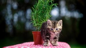 Baby Animal Kitten Pet 2048x1463 Wallpaper