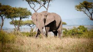 Elephant 3840x2160 Wallpaper