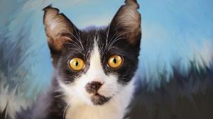 Cat Pet Stare 1920x1280 Wallpaper