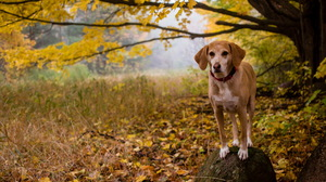 Dog Fall Leaf Rock 2560x1707 wallpaper