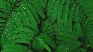 Leaves Nature Plants Water Drops 4896x3264 Wallpaper