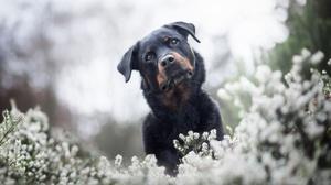 Dog Pet 2048x1365 Wallpaper