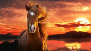 Entropy Horse 1920x1080 Wallpaper