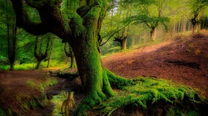 Forest Greenery Moss Nature Tree 2048x1365 Wallpaper