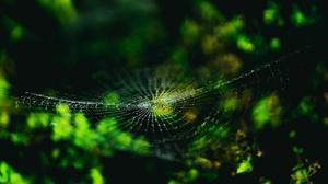 Macro Nature Spider Spider Web 3840x2400 Wallpaper
