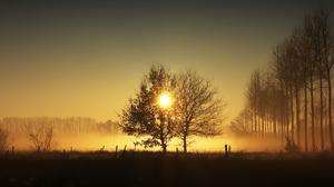 Sun Warm Mist Nature Trees 3840x2160 Wallpaper