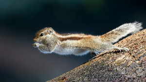 Squirrel Rodent Animal Jump Wildlife 2048x1365 Wallpaper