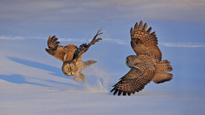 Nature Animals Owl Fighting Snow Jumping 1920x1080 Wallpaper