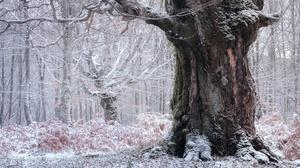 Winter Nature Trunk 3840x2160 Wallpaper