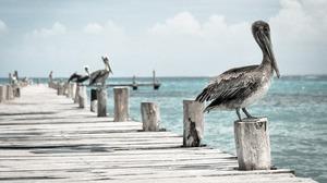Animal Bird Pelican Pier 4096x2400 Wallpaper