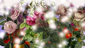 Rose 1920x1080 Wallpaper