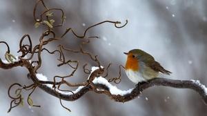 Bird Branch Winter Snow Wildlife 2048x1425 Wallpaper