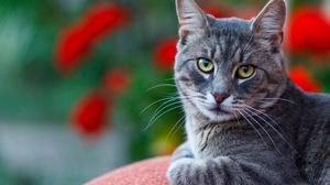 Cat Depth Of Field Pet Stare 2136x1424 Wallpaper