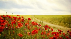 Dirt Road Field Flower Nature Poppy Red Flower Summer 1920x1114 wallpaper