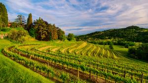 Man Made Vineyard 2048x1357 Wallpaper
