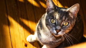 Animal Cat 2560x1600 Wallpaper