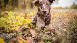 Depth Of Field Dog Fall Pet 2046x1198 Wallpaper