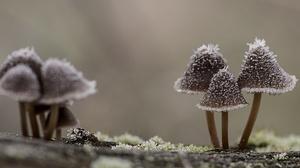 Macro Mushroom Nature 2560x1440 Wallpaper