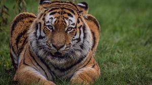 Big Cat Wildlife Predator Animal Stare 2048x1333 Wallpaper