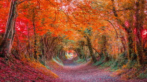 Canopy Colorful Fall Forest Tunnel 2048x1367 Wallpaper