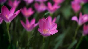 Nature Pink Flower 3840x2400 Wallpaper