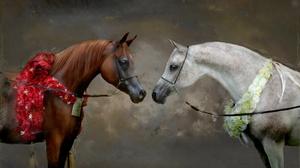 Animal Horse 3414x1963 Wallpaper