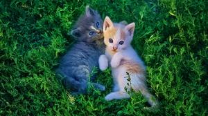 Baby Animal Cat Grass Kitten Pet 2560x1440 Wallpaper