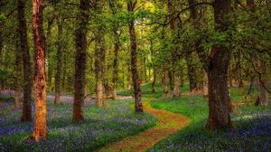 Flower Forest Nature Path 2048x1365 Wallpaper
