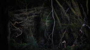 Nature Animals Plants Giraffes Outdoors Mammals Trees Branch Evening Baby Animals 2048x1365 Wallpaper