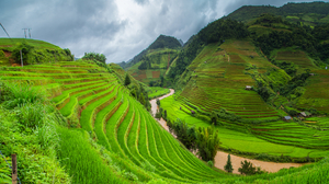 Nature Landscape Clouds Terraced Field Rice Fields Rice Paddy Valley Asia River Green Grass Trees 1920x1080 Wallpaper