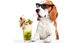 Beagle Cocktail Dog Pet Sunglasses 5440x3400 wallpaper