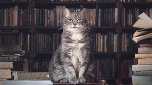Book Cat Library Pet 5339x3548 Wallpaper