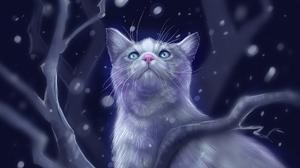 Cat Night 1920x1080 Wallpaper