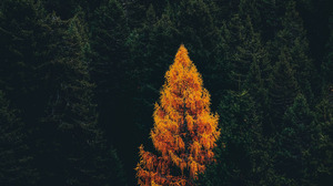 Earth Tree 3840x2160 Wallpaper