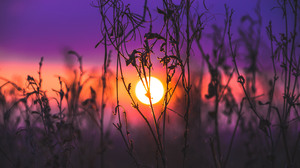 Plant Sunset 3000x2000 wallpaper