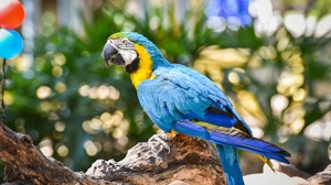 Bird Blue And Yellow Macaw Parrot Wildlife 2000x1335 wallpaper