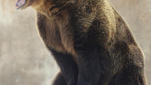 Animals Nature Bears 2531x3000 Wallpaper