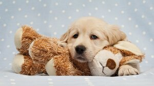 Baby Animal Dog Golden Retriever Pet Puppy Stuffed Animal 2560x1600 wallpaper