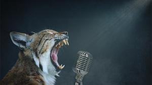 Animal Lynx 3923x2513 Wallpaper