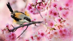 Branch Blossom Sakura Pink Flower Spring 2048x1365 Wallpaper