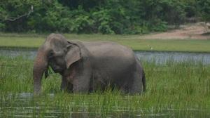 Elephant Wildlife 6000x4000 Wallpaper