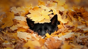 Dog Leaf Pet Stare 2048x1262 wallpaper