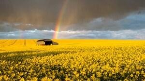 Barn Earth Field Rainbow Rapeseed Summer Yellow Flower 2000x1333 Wallpaper