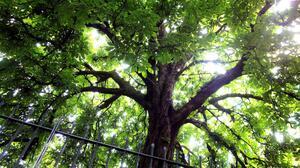 Canopy Earth Green Tree 1920x1080 Wallpaper