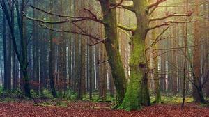 Forest Moss Pine 3840x2160 Wallpaper