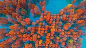 Aerial Forest Foliage 1920x1080 wallpaper