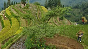 National Geographic Terraces Farm Peasants Rice Paddy China 1600x1200 Wallpaper